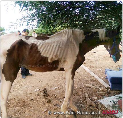 חוות סוסים לא חוקית בסמוך לחניון דן