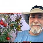 ראובן אורן מומחה לגינון אורגני ברקע: שתיל עגבניות מירקות קיץ ה-גינה ביתית אורגנית | צילום: ראובן אורן | עיבוד ממחושב: שולי סונגו©